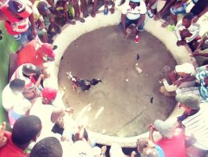 La pelea de gallos es una de las principales distracciones de los habitantes del islote, que no cuentan con salas de teatro, bibliotecas o parques.